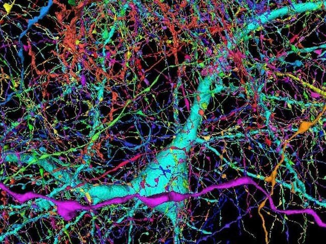 Google Has Created A Detailed Detailed Map Of The Human Brain