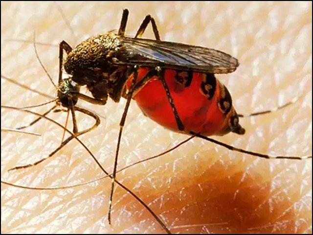 Will Dengue And Malaria Be The Next Global Epidemic?