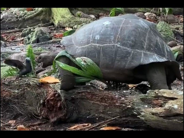 The Tortoise Hunted The Bird ... Video Viral